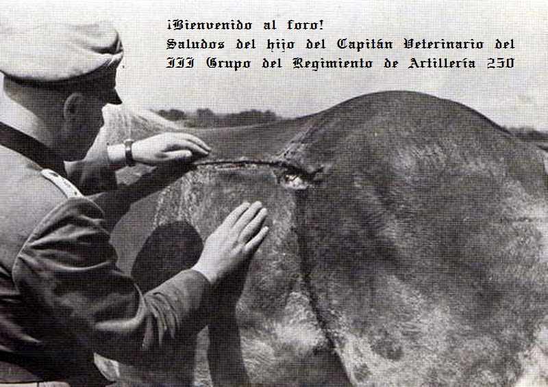A veterinary of a German artillery battalion examines the shrapnel wound of a Haflinger.jpg